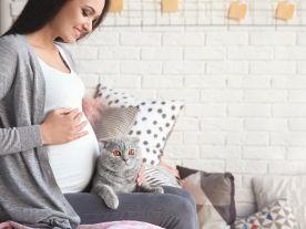Домашни любимци и бебе на път - Част 2